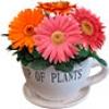 Семена цветочных культур