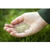 Многолетние кормовые травы