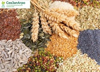 Представляем Вашему вниманию ассортимент семян по зерновым и бобовым культурам, собственного производства на сезон 2021 г.