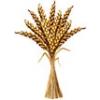 Зерновые и бобовые культуры